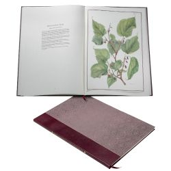 Illustrated pages of The Queen's Mulberries Limited Edition book.